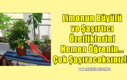 Limonun Büyülü ve Şaşırtıcı Özelliklerini Hemen Öğrenin… Çok Şaşıracaksınız!!!