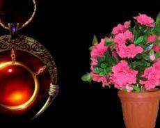 Evinizi Yoksulluk Ve Sorunlardan Koruyabilecek Bitkiler