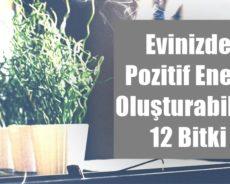 Evinizde Pozitif Enerji Oluşturabilen 12 Bitki