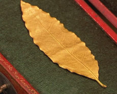 Defne Yaprağı Şansı ve Zenginliği Çekmek İçin Kullanılan Güçlü Bir Tılsımdır