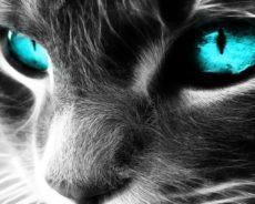 Kedilerin Ruhsal Koruyucu Olmalarının Nedenleri