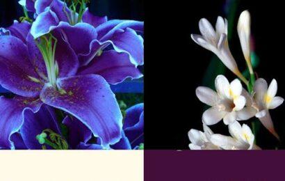 Evinizde Asla Bulunmaması Gereken 7 Çiçek