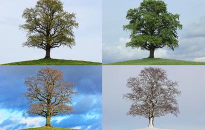 Doğduğunuz Mevsim Mesleğinizi ve Para Çekme Gücünüzü Nasıl Etkiler