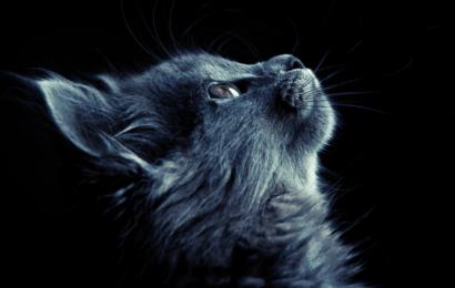 Sizi Seçen Bir Kedinin Manevi Önemi