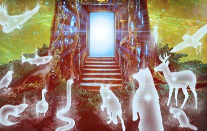 Ruh Hayvanları – Varlığımızla Nasıl Bağlantılılar