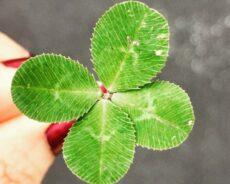 Şansınızı Nasıl Programlayabilirsiniz: Şanslı Bir Kişinin 10 İşareti