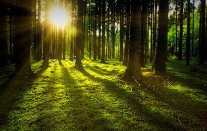 Güneş Işığının Enerjisi: Mutluluk, Güzellik Ve İyi Şans İçin Yaz Uygulamaları