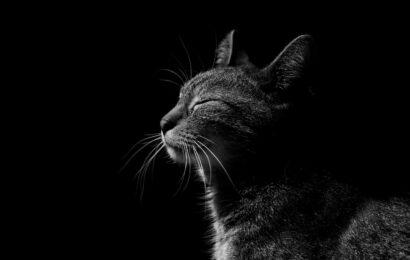 Kediler Sorunları Nasıl Tedavi Eder Ve Uzaklaştırır: Gerçekler Ve İşaretler