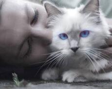 Kedilerle Ruhsal Bir Bağın Olduğunda