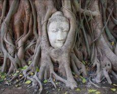 Bir Ağaçtan Öğrenebileceğin 5 Ders