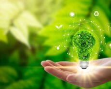 Yeşil Rengin Anlamı, Enerjisi Ve Faydaları