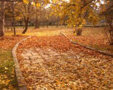 Sonbahar Büyüsü: Hayatına Sevgi, Şans Ve Mutluluk Nasıl Getirilir